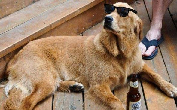 Article heading image for Grab A Frothie With Your Furry Best Mate At This Brisbane Bar