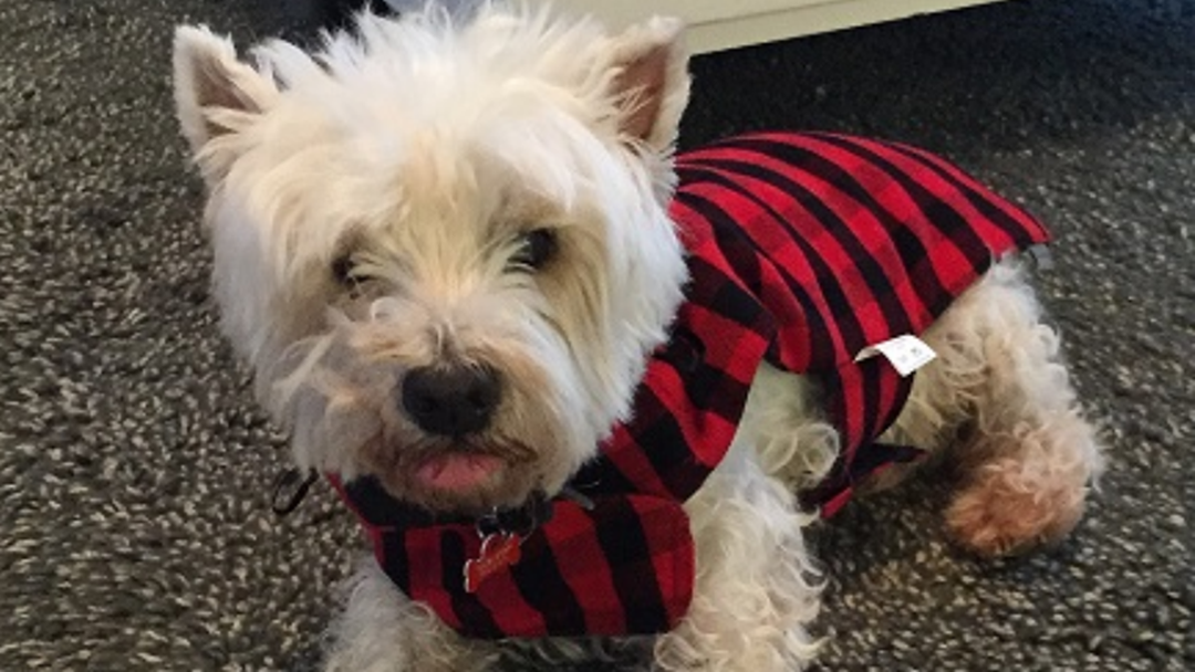 Family Pooch Brutally Killed With Towel From Backyard Clothes Line