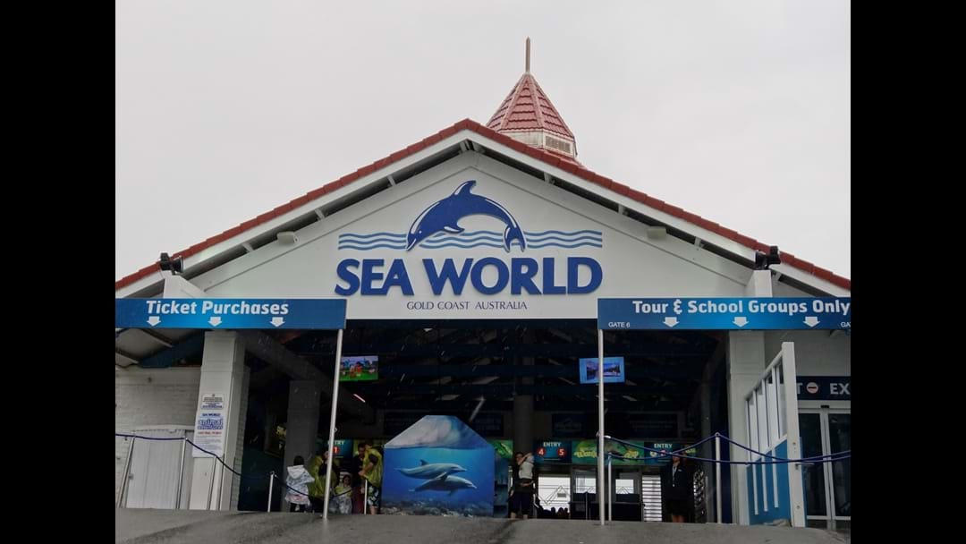 One Of Sea World's Newest Residents Has Passed Away