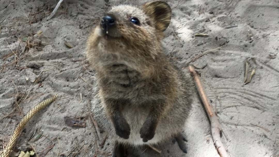 'Quokka' Makes Shortlist In Name The Plane Comp
