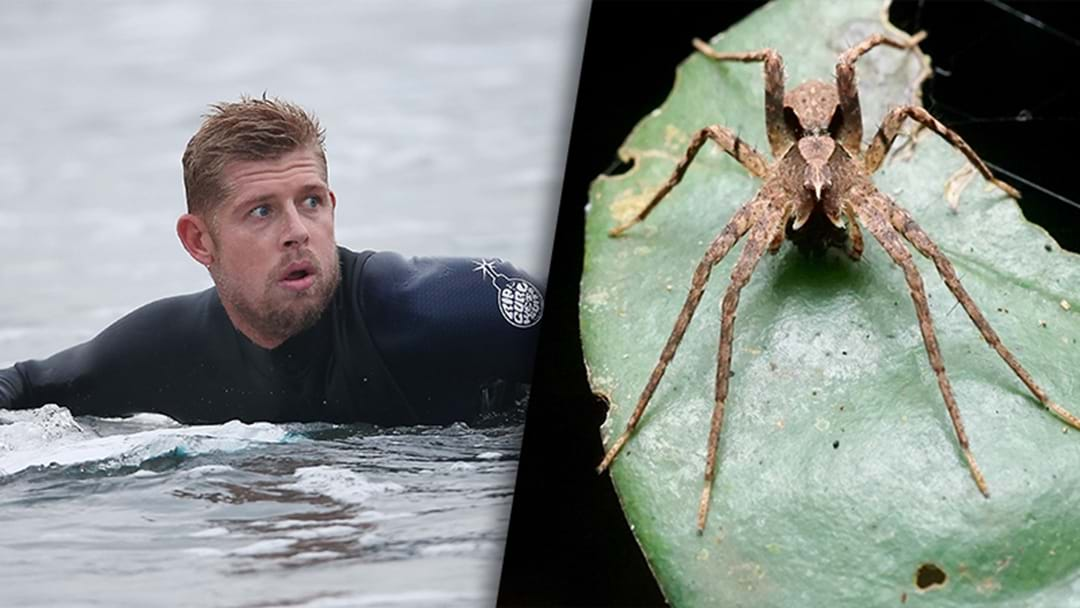 New Spider Species Named After Mick Fanning