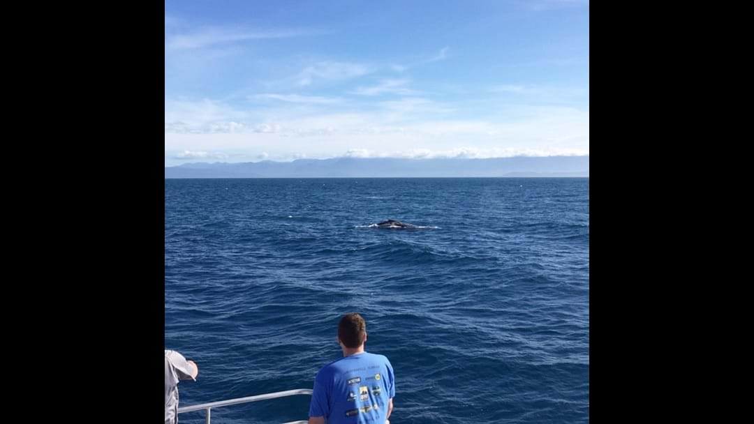 First Humpback whale for the season
