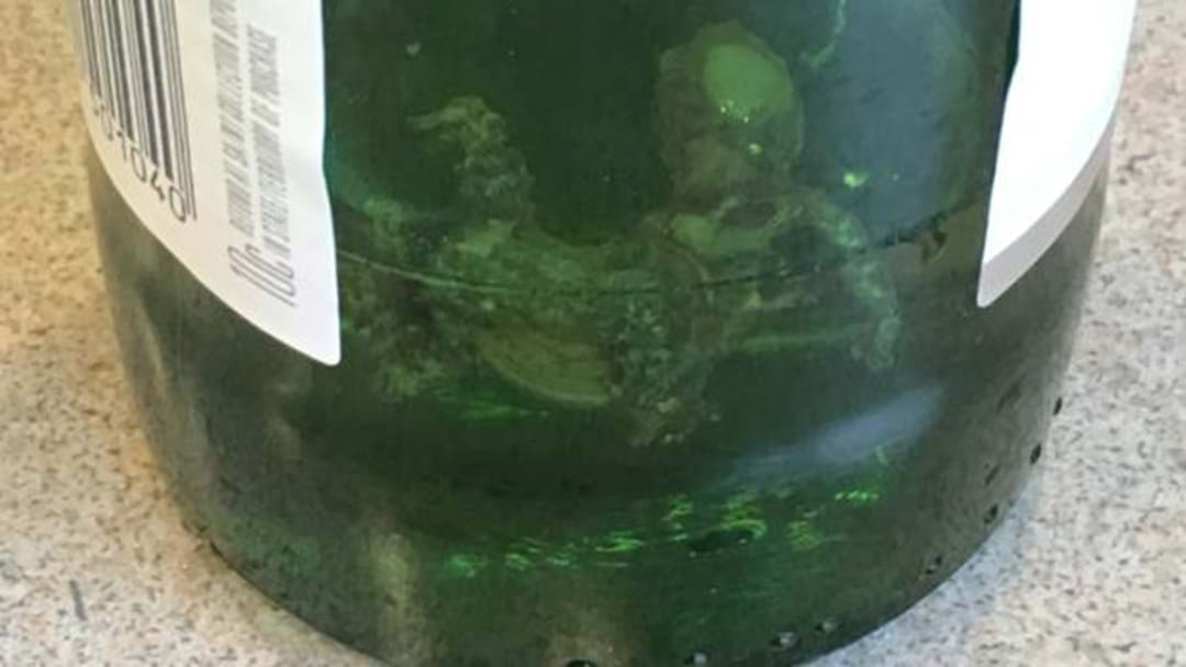 Woman 'Disgusted' After Finding Dead Lizard In Beer Bottle