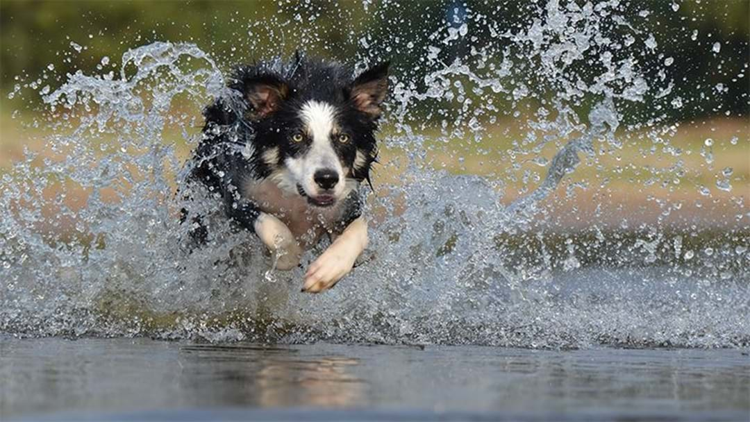 This Year's Swan Valley Mudfest Features A DOG Challenge