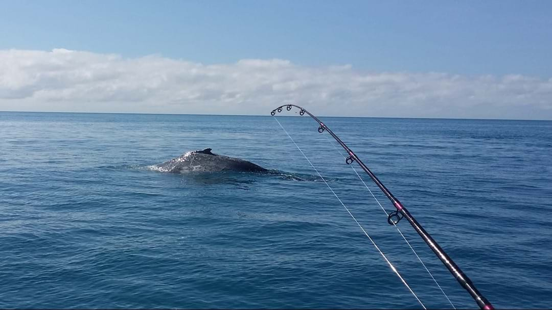 Whitsundays Crew 'All Ok' After A Whale Landed On Their Boat
