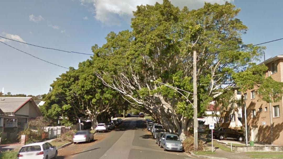 Cooks Hill Fig Trees To Be Chopped Down