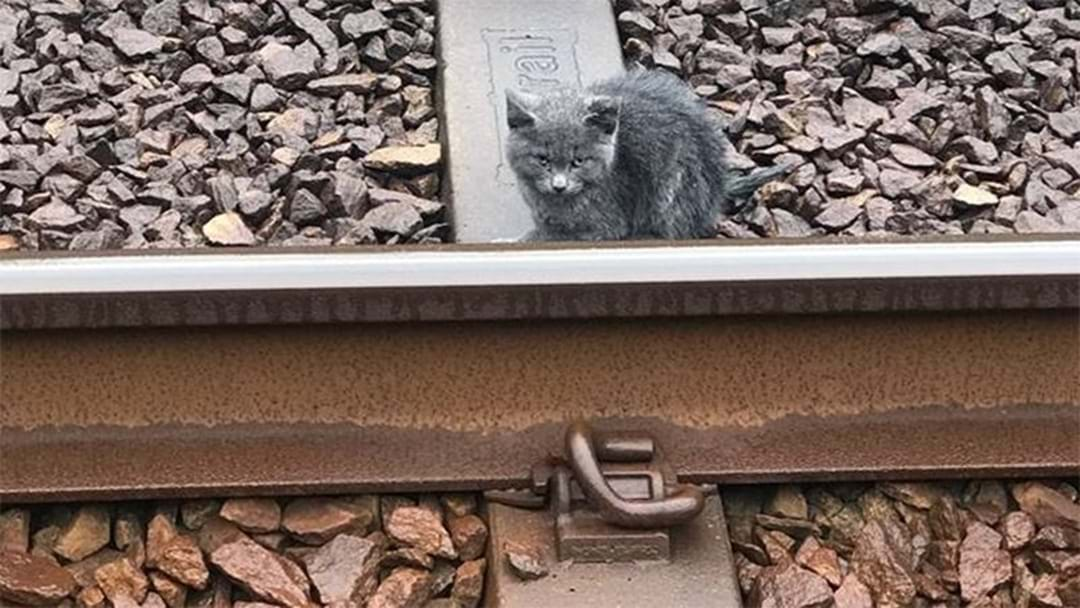 This Perth Kitten Survived A Terrifying Encounter With Twelve Trains