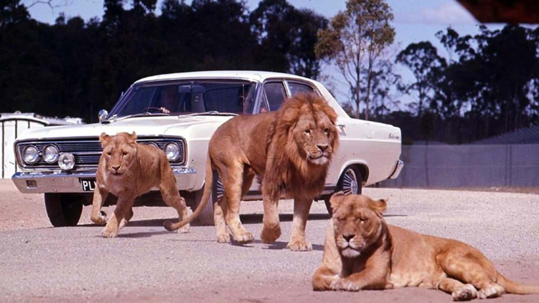 The eventful history of Bullen's African Lion Safari Park in Yatala