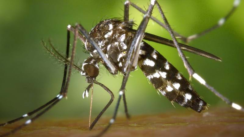 Article heading image for Six Reasons Why B*stard Mozzies Bite You Over Someone Else