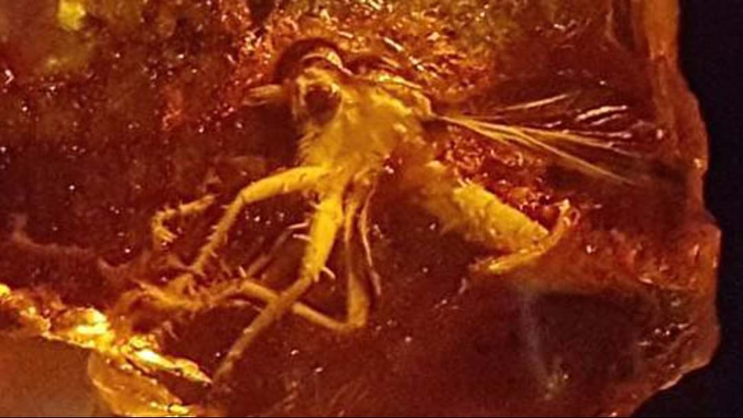 Researchers Channel Jurassic Park With Aussie Amber Find