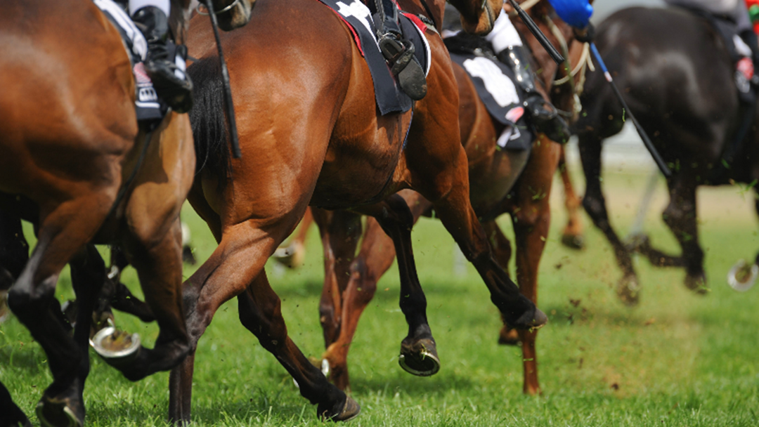 Scam Warning For Melbourne Cup Punters