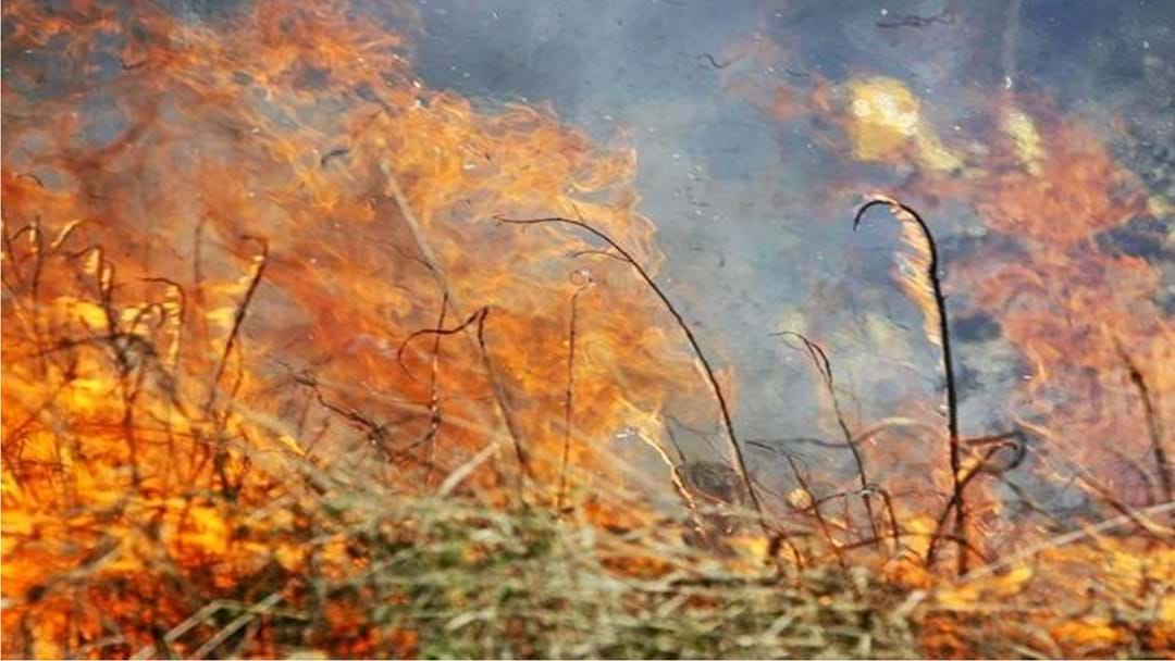 Bush Fire Season Is Here