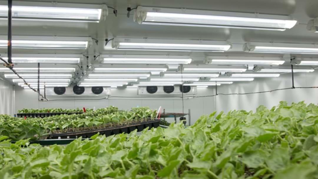 Withcott Seedlings Picks Up Inaugural Judy Antonio Memorial Award