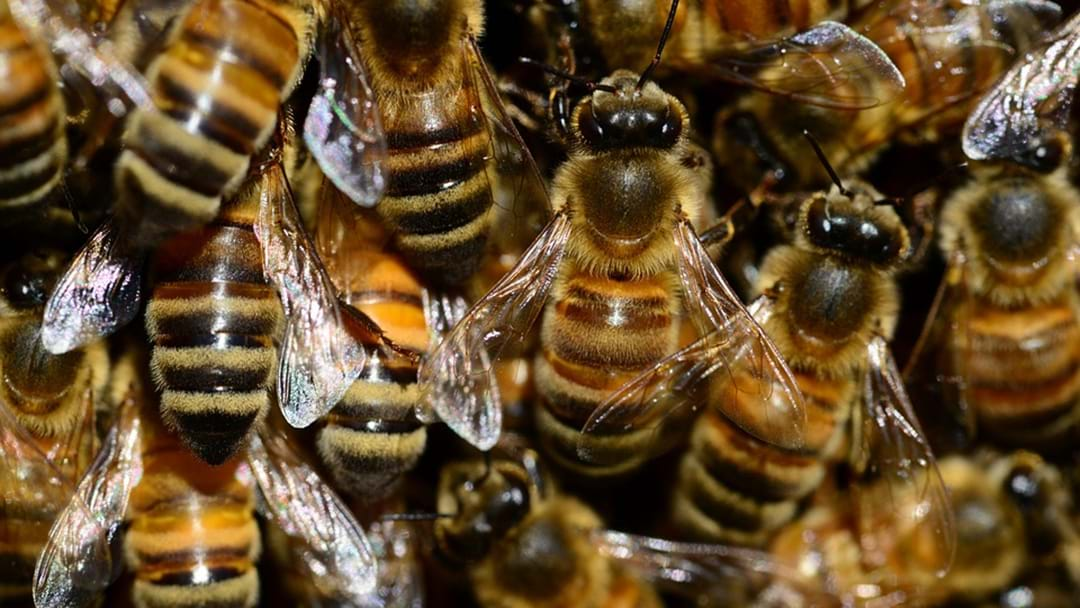 'Traces Of Pesticides' Found In Study Of World Honey Supplies