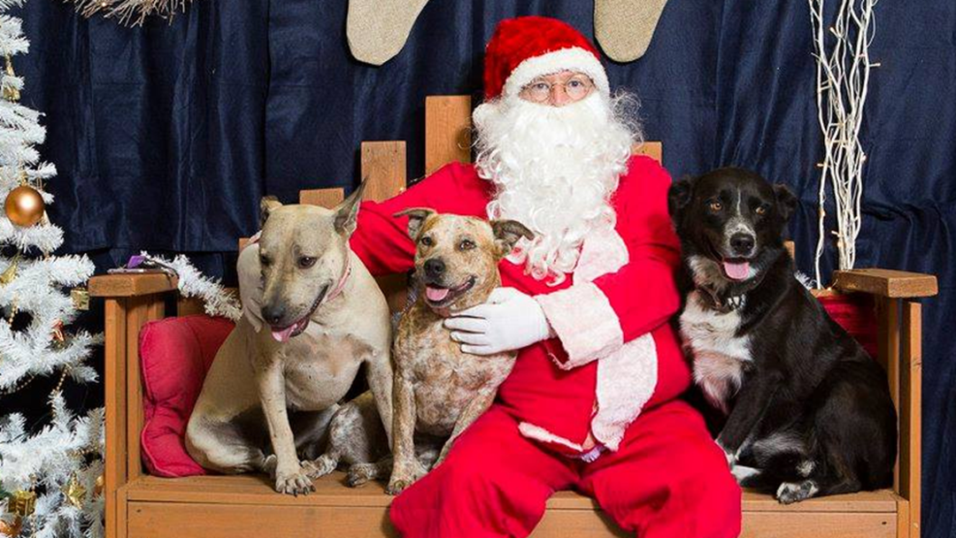 Date For RSPCA Santa Paws Photos Revealed