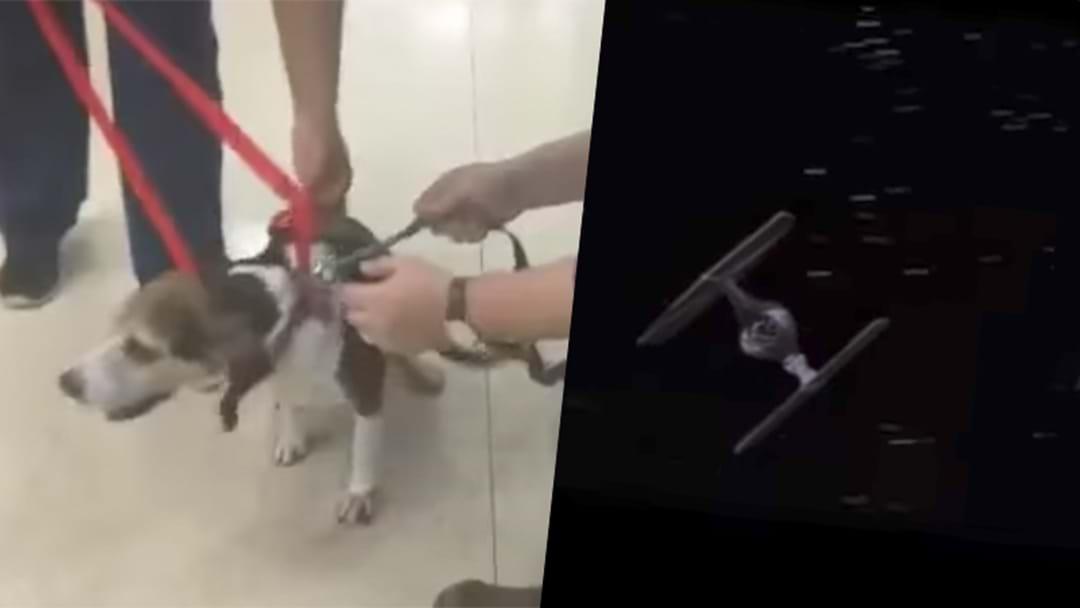 Barking Star Wars Dog Video Divides The Internet