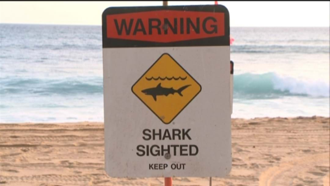 Surfer Bitten By Shark At Port Stephens Beach