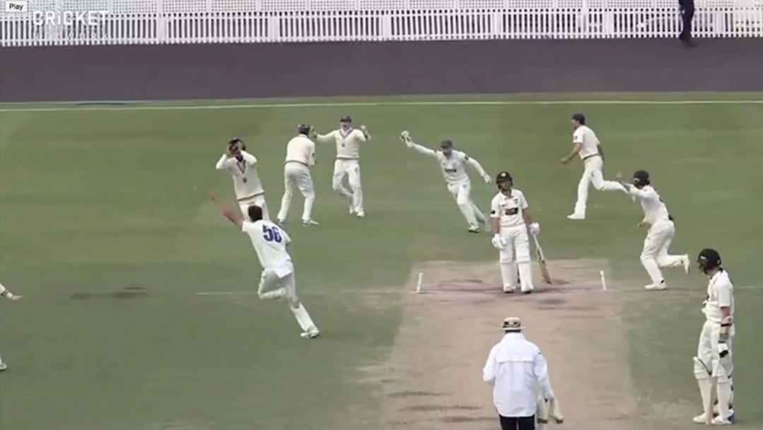 Mitchell Starc Has Taken Another Bloody Hat-Trick In The Sheffield Shield