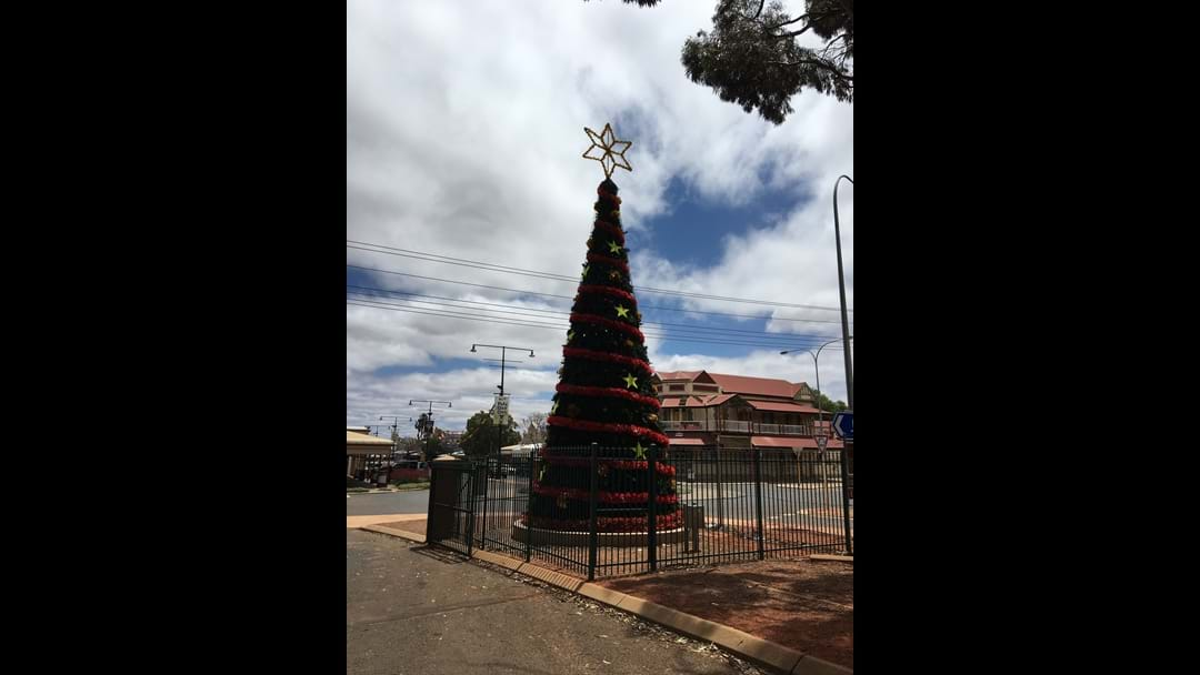 Christmas Tree to Light Up CBD
