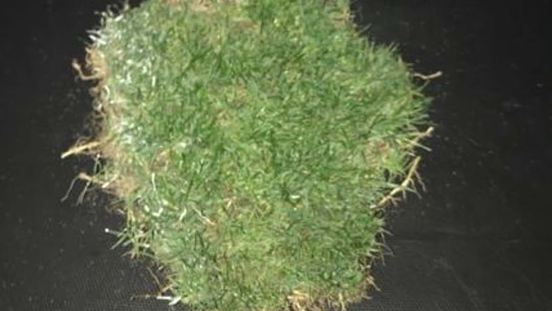 Someone's Already Selling Turf From Domain Stadium On Gumtree