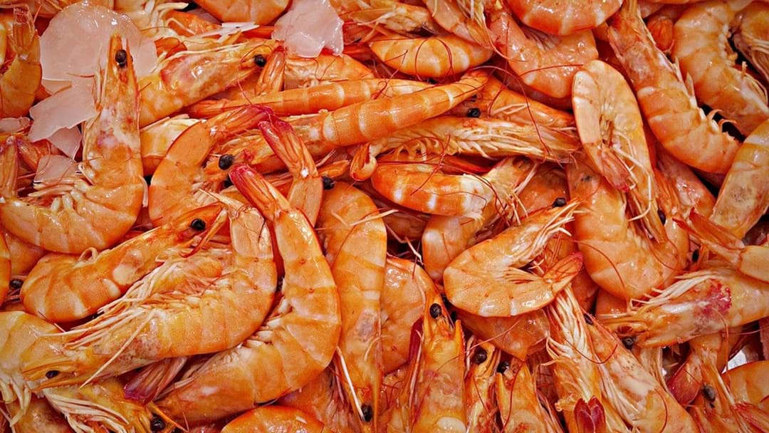 Prawn Shipment Tests Positive To White Spot Disease