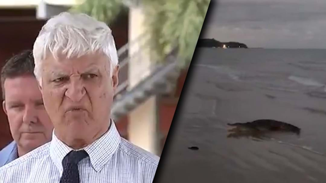 Bob Katter Calls For Action After A Crocodile Was Spotted On North Queensland Beach