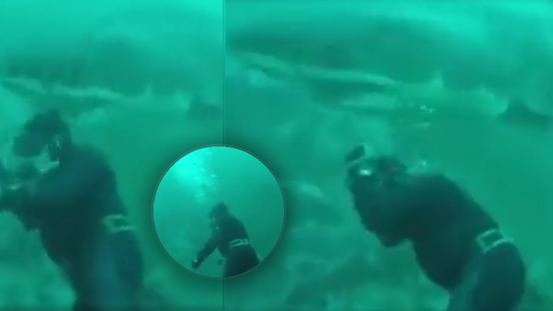 WATCH: Diver's Heart-Stopping Encounter With A Great White Shark