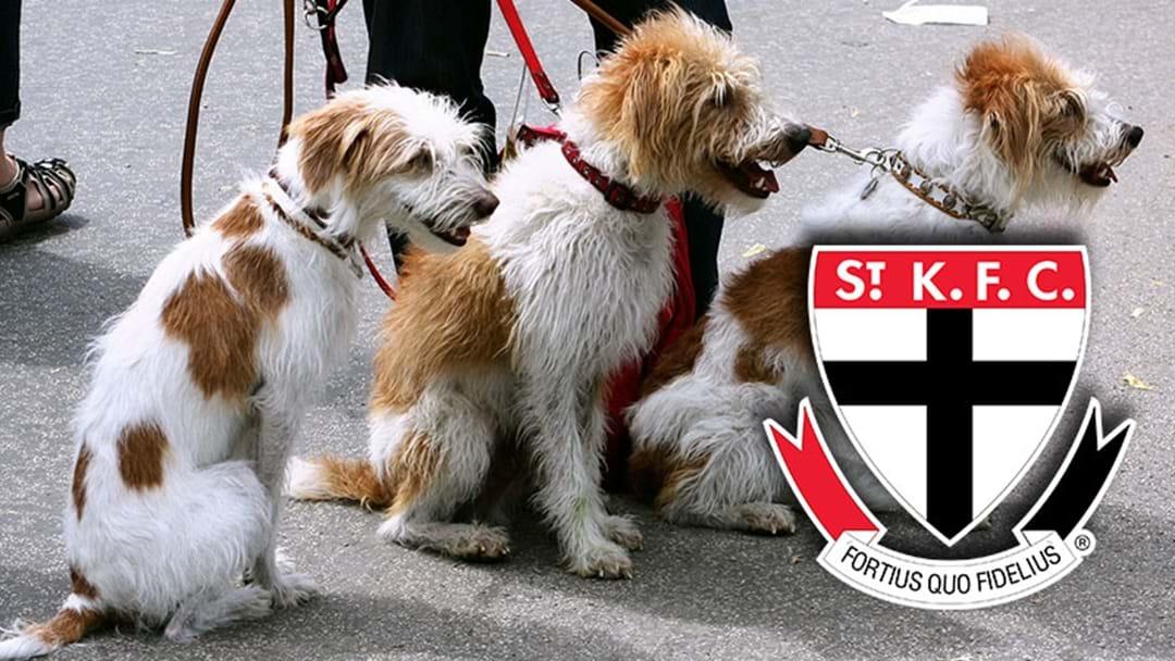 St Kilda Has Signed A Pet Membership Sponsor