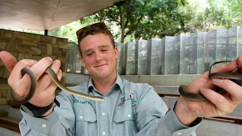 Article heading image for New Reptiles For Blackbutt Reserve