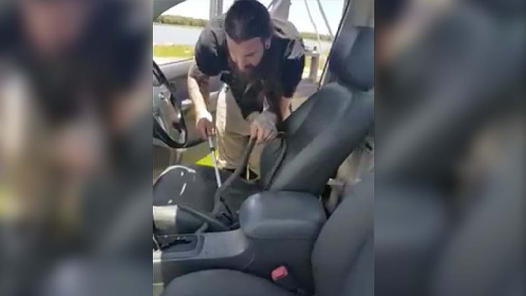 Bloke Gets The Fright Of His Life After Finding An Eastern Brown Snake In His Ute