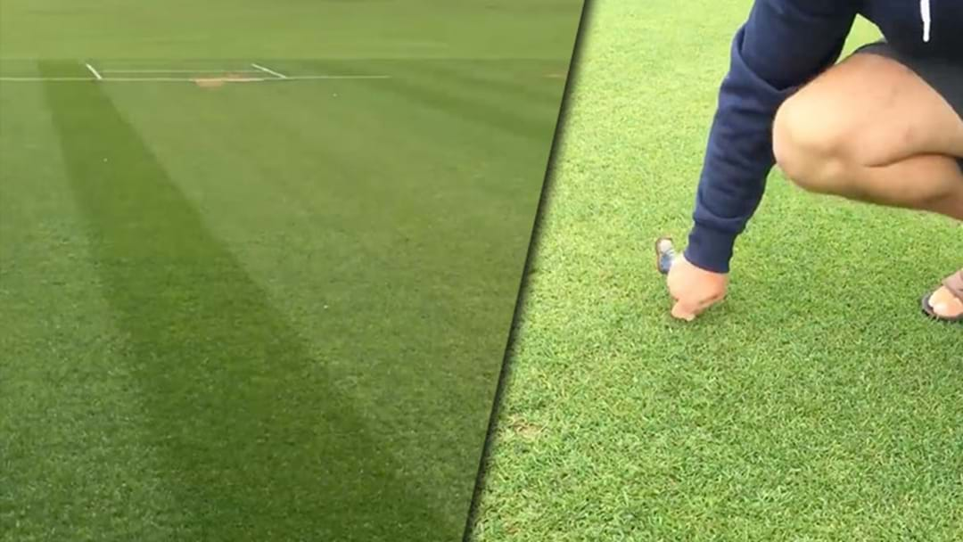 Kiwi Bloke Nails A Tony Greig Impression As He Inspects The Greenest Wicket You'll Ever See