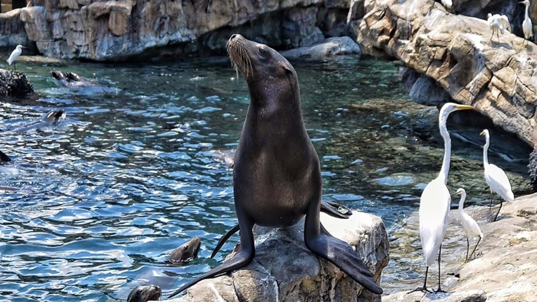 Major shake-up for Sea World's seal show