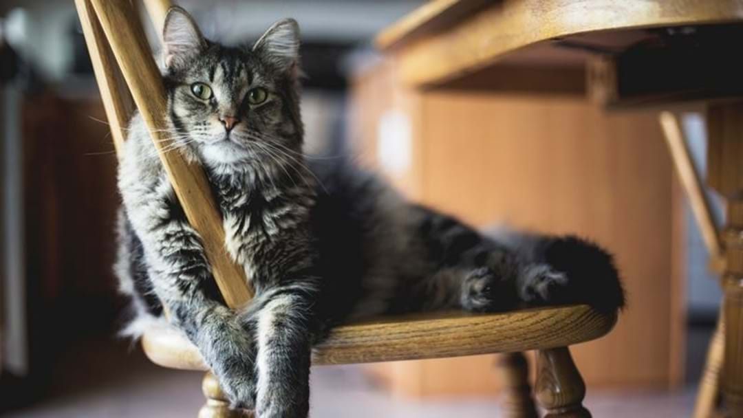 A Pet Translator Is On The Way So You'll Finally Know If Your Cat Is Judging You