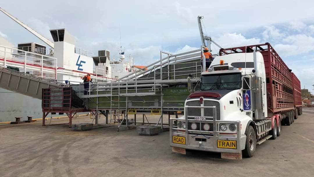 First Shipment Of Northern Cattle Destined For China Has Left Townsville