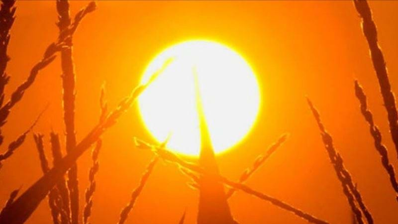 Article heading image for Heat Health Warning in Central Victoria today