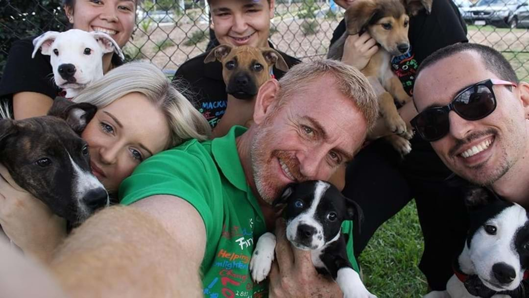 How You Can Walk All The Dogs At Townsville RSPCA