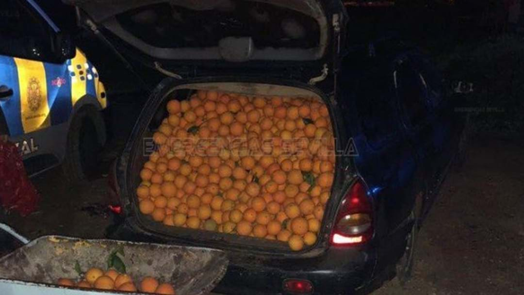 5 People Arrested After Delicious Robbery Of 4000kgs Of Oranges