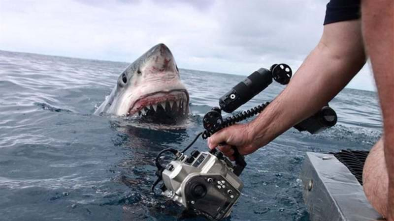 Article heading image for Shark Numbers... declining?
