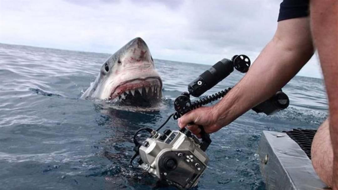 Shark Numbers... declining?