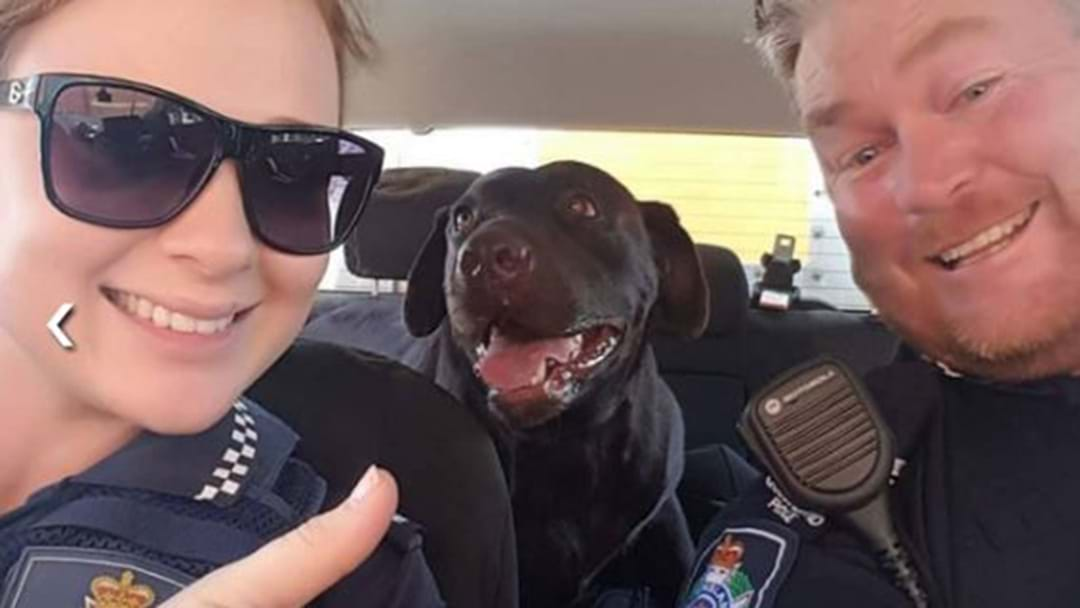 Police Rescue A Dog From A Hot Car… And Then Pose For A Selfie