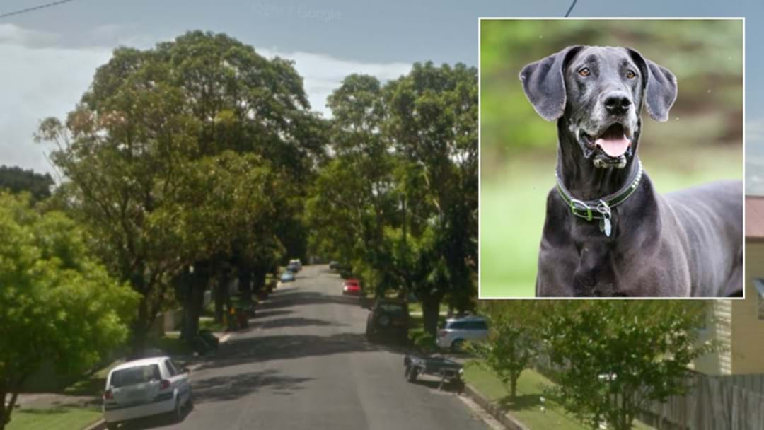 Young Boy Injured In Newcastle Dog Attack