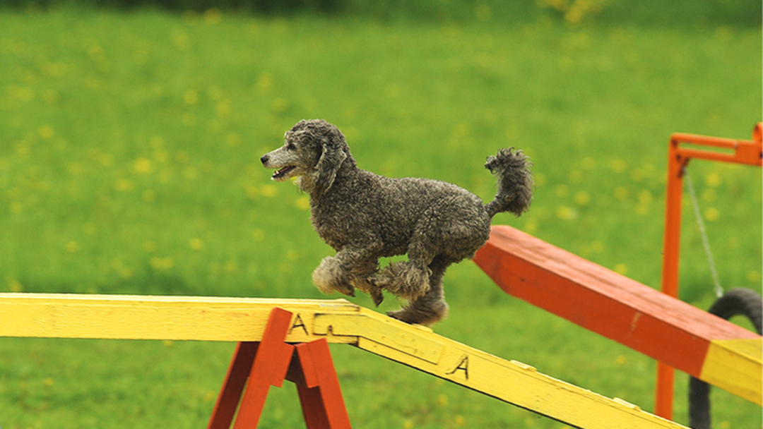 Theres A Super Fun Dog Competition In Toukley This Weekend!