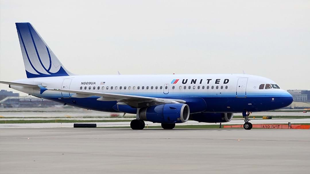 Dog Dies After Flight Attendant Orders It To Be Stored In Overhead Compartment