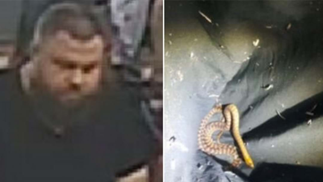 Police Want To Speak To This Bloke After 3 Snakes Were Found In The Post