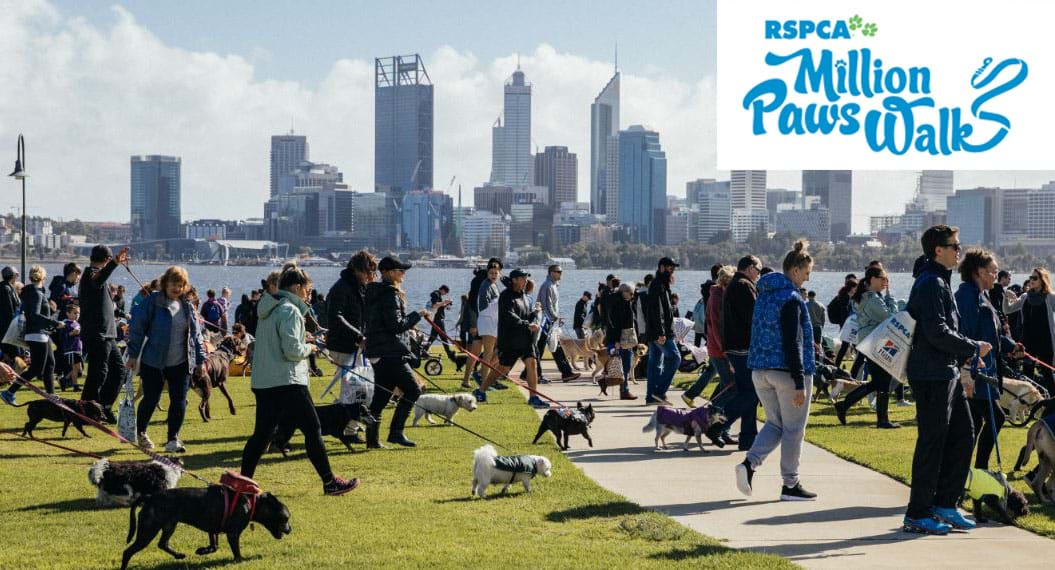 million paws walk - photo #17