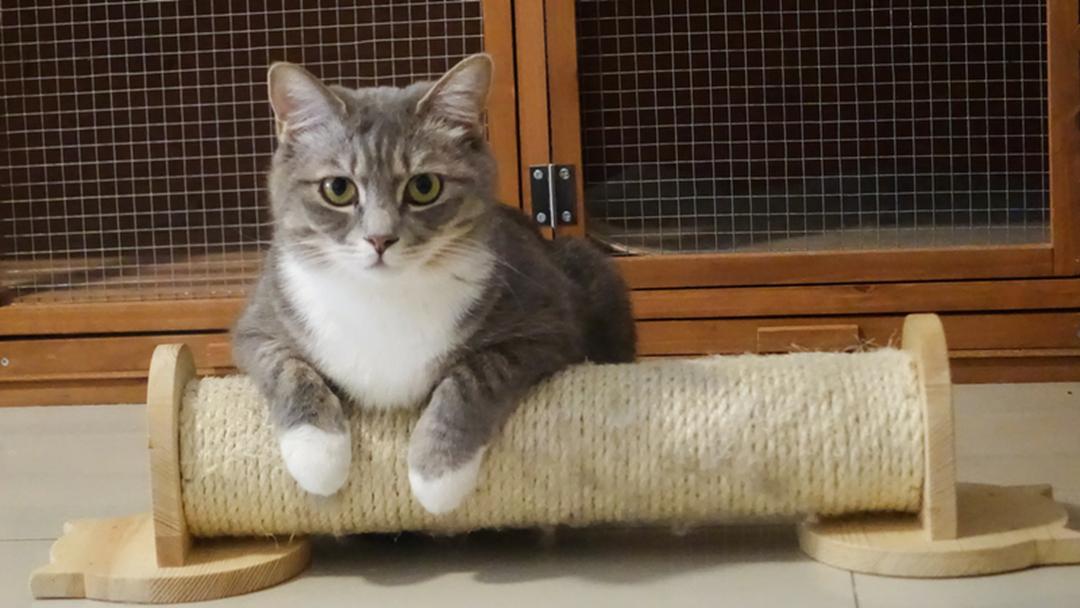 Last Week For $50 Pet Adoptions In Echuca