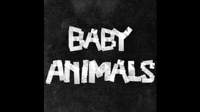 WIN A Guitar Signed By The Baby Animals