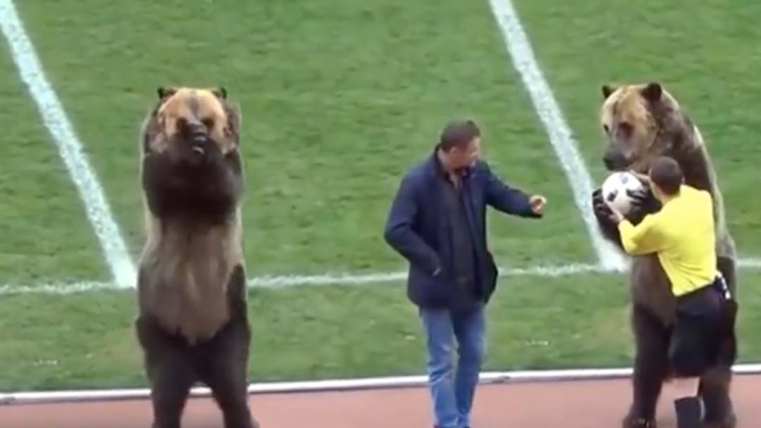 An Actual Bear Handed Over The Match Ball At A Russian Soccer Match