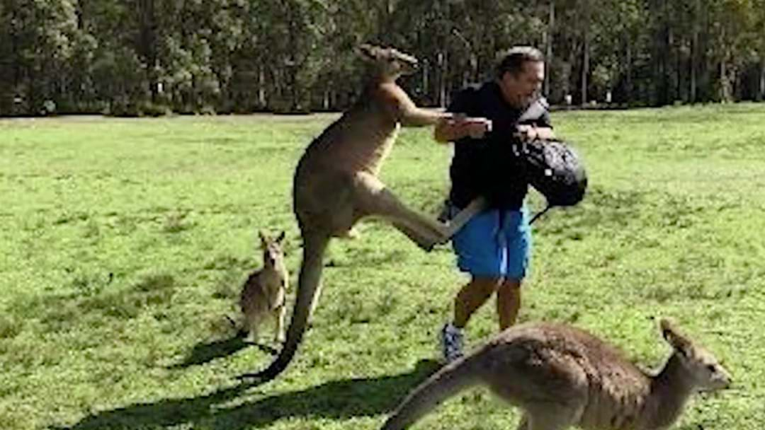 Warnings Issued After Serious Kangaroo Attacks Outside Hospital