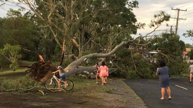 Trees Down as Wild Storms Cause Damage on Coffs Coast